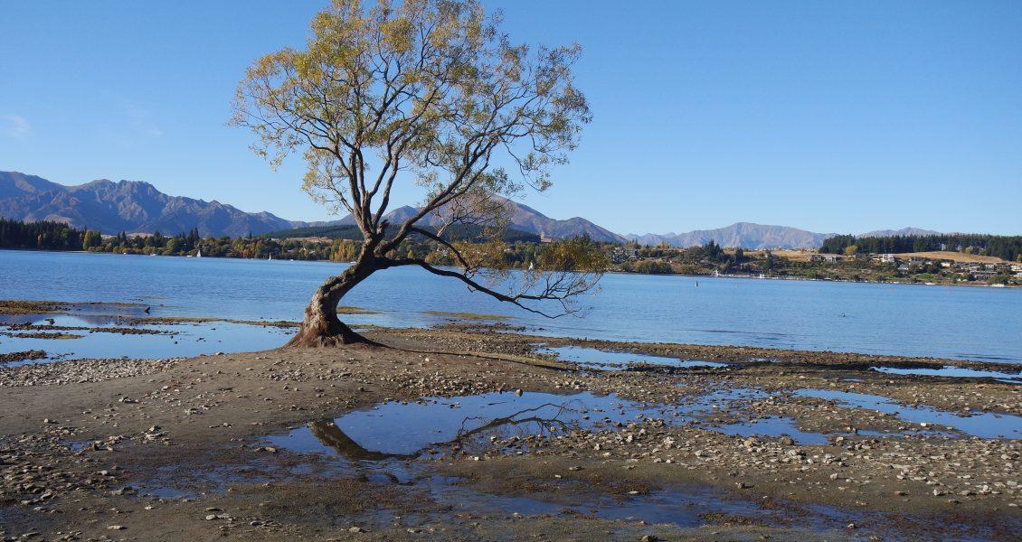 de boom van Wanaka