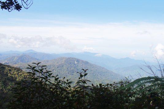 Uitzicht vanaf Mossy Forest