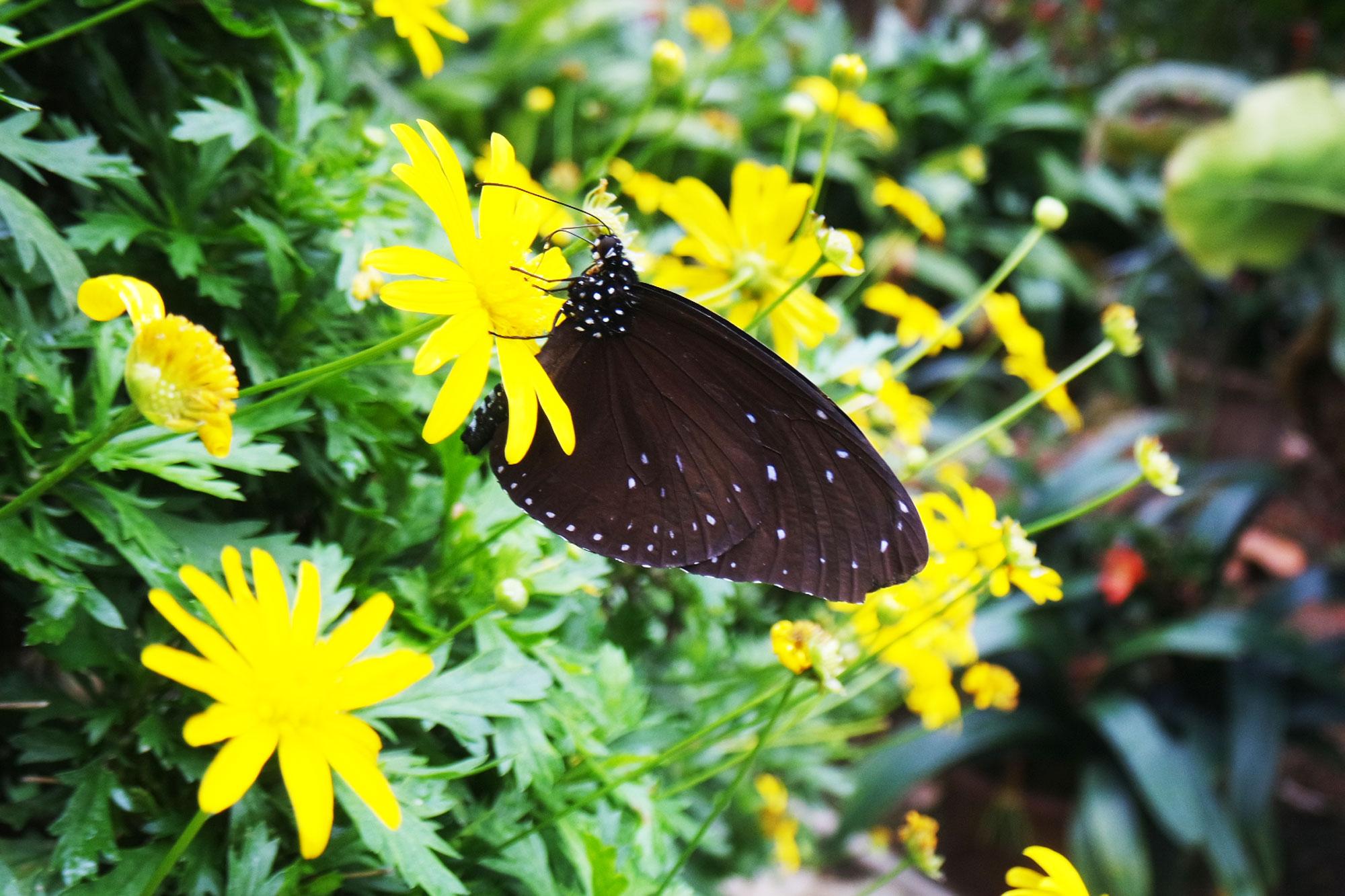 Vlinder in de vlindertuin