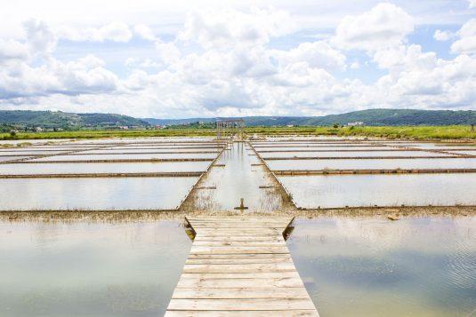 Sečovlje Solina, Zoutvelden van Piran